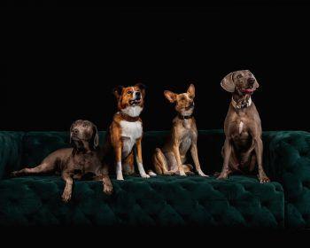 Beim Weihnachtsbasar am 12. Dezember wird der neue Waua Miaua Hundekalender vorgestellt. Pro verkauften Kalender gehen fünf Euro an das Vorarlberger Tierheim.