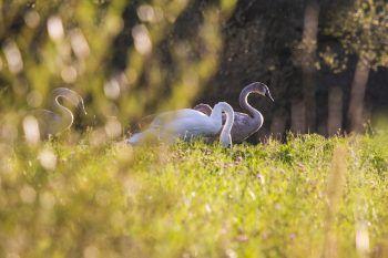 """<p class=""""title"""">               Sagenhafte Natur             </p><p>Nicht nur die Bewohner des Rheindelta wissen die Gegend zu schätzen, auch die Tierwelt fühlt sich in dem naturnahen, vielfältigen Lebensraum pudelwohl. Fotos: handout/VBC Höchst, H. Küng</p>"""