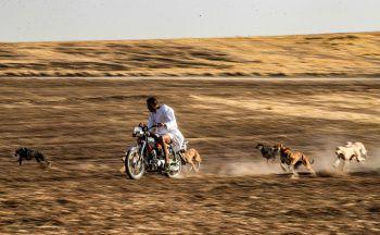 <p>Hasakah. Rasant: Ein kurdischer Hundezüchter liefert sich ein Rennen mit seinen Schützlingen in der syrischen Provinz.</p>