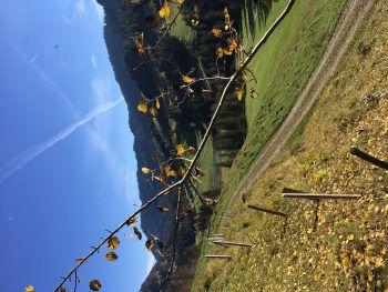 Herbstliche Wanderung. Foto: handout/Ölz