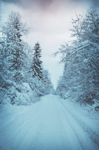 Bei diesem wundervollen Schneewetter möchte man einfach raus in die Natur.