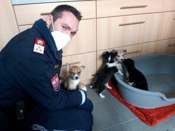 <p>Leobersdorf. Gerettet: Ein Polizeibeamter kümmert sich um vier Welpen, die am Wochenende bei klirrender Kälte ausgesetzt wurden. Die kleinen Vierbeiner wurden an das Tierschutzhaus Baden übergeben.</p>