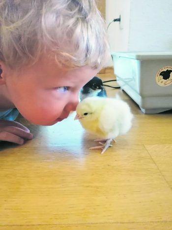 """<p class=""""caption"""">Der kleine Luis (1) mit seinem frisch geschlüpften Küken.</p>"""