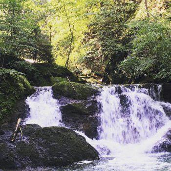 Die Wasserfälle plätschern idyllisch durch den Wald.Fotos: handout/The Sunny Side of Kids/Ölz