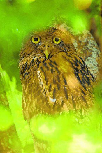"<p>Yala. ""Guckst du"": Eine Eule hat den Fotografen im Yala National Park in Sri Lanka genau im Blick. Fotos: AFP, AP</p>"