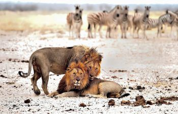 Jetzt den Süden Afrikas gemeinsam mit Herburger Reisen erleben!Fotos: Herburger Reisen/ Shutterstock