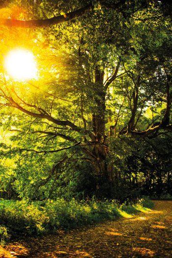 """<p class=""""caption"""">""""The Tree of Life"""": Nicolas interessiert sich auch für Naturfotografie.</p>"""