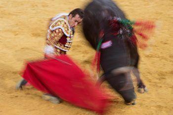 <p>Granada. Blutig: Ein Torrero kämpft gegen einen Bullen. Die spanische Tradition der Stierkämpfe ist höchst umstritten.</p>