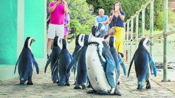 Stadt der PinguineNetflix, Serie, Doku. In einem malerischen Städtchen in Südafrika begibt sich eine ganz besondere Truppe bedrohter Pinguine jedes Jahr auf Partnersuche und mischt sich unter die Anwohner. Läuft ab sofort.