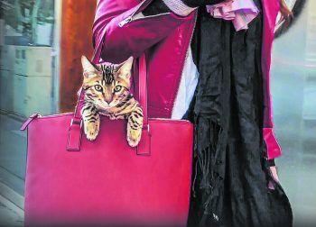"""<p class=""""title"""">Cat People</p><p>Netflix, Serie, Doku. Katzenliebhaber sind so vielfältig wie Katzen selbst. Gemeinsam haben sie alle aber die Liebe zu ihren einzigartigen Samtpfoten. Läuft jetzt.</p>"""